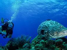 En Cozumel, M�xico, una de las mecas de los submarinistas, pueden verse tortugas acu�ticas como �sta.